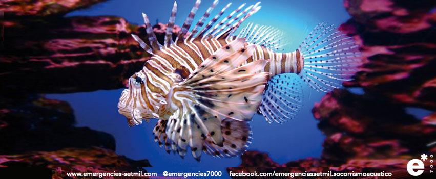 Imagen de peces ponzoñosos