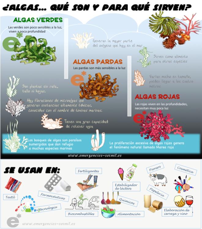 algas.que.son.y.para.que.sirven.infografia