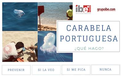 Carabela portuguesa, primeros auxilios
